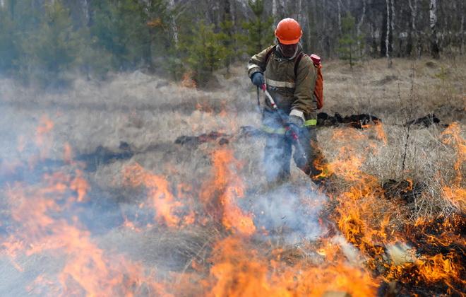 пожар лесной картинки